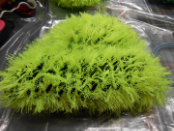 Fuzzy Green and Black Hat